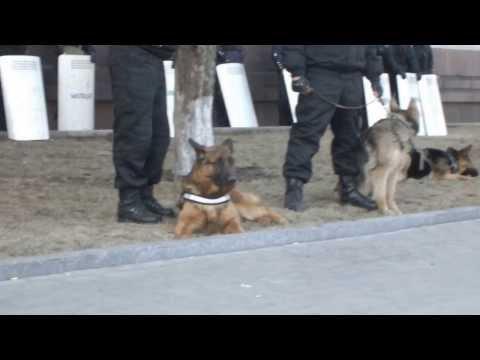 Донецкая обладминистрация приготовилась к войне. 09.03.2014 (видео)
