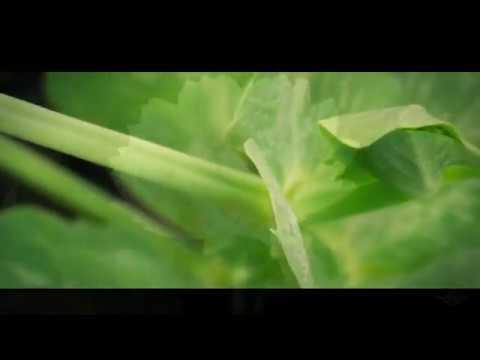 ZONTAG svetli na 'Procvetam (Biljka koja hoda)'