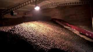 Video Technologia zbioru ziemniaka w Proagri Mieścisko MP3, 3GP, MP4, WEBM, AVI, FLV November 2017