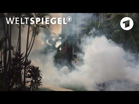 Singapurs Kampf gegen Mücken | Weltspiegel