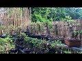 Download Lagu Ngỡ ngàng khi lạc vào vườn Sứ Thái Bonsai Mp3 Free
