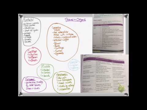 OCR A LEVEL BIOLOGY NEW LINEAR SPEC- UNIT 2.6 CELL DIFFERENTIATION, ORGANS AND STEM CELLS