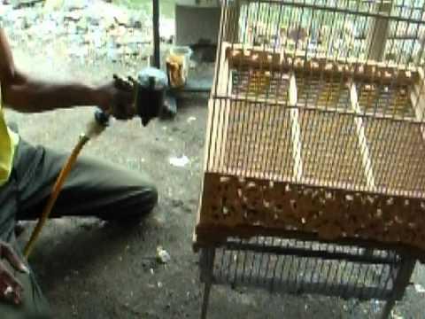kerajinan sangkar burung bahan jati