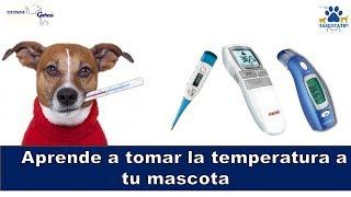 Te gustaría saber como se toma la temperatura a una mascota? SUSCRIBETE: https://goo.gl/ufsvRw FACEBOOK:...