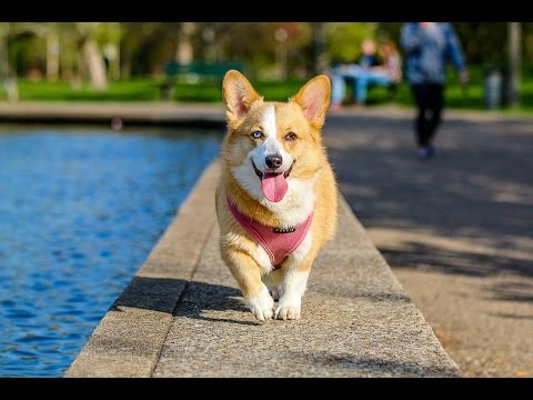 Top 10 Cool Tricks To Teach Your Dog