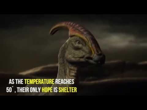 Last days of Dinosaurs
