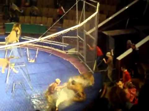 Leones de circo atacan a su entrenador