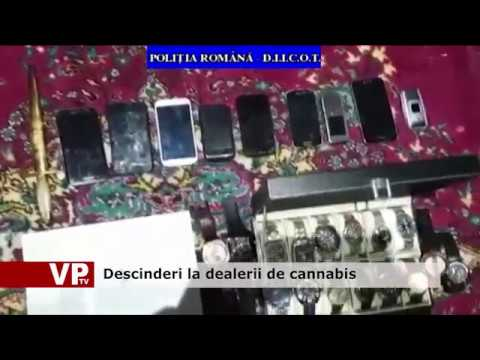 Descinderi la dealerii de cannabis