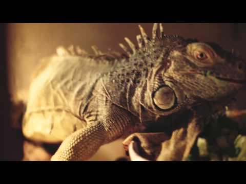 Gala Edis 2015 | Monsieur Reptile