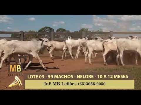 197º LEILÃO VIRTUAL MB LEILÕES