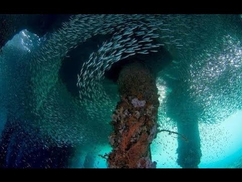 Diving King Cruiser Wreck | Phuket Scuba Day Trips Wreck Diving HD Video by Freedom Divers Phuket