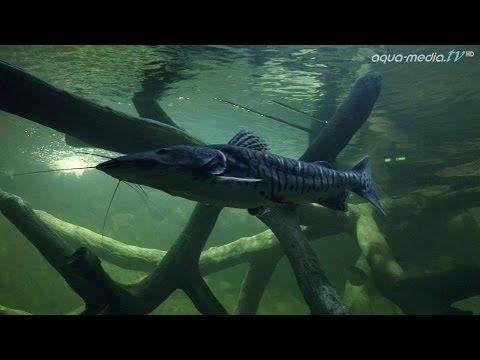 105.000 Liter: Europas größtes privates Heimaquarium  ...