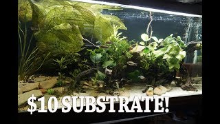 Sand for a Planted Aquarium? Amazing Transformation by Rachel O'Leary