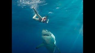 Video Sharks Attacking People part 2 MP3, 3GP, MP4, WEBM, AVI, FLV Desember 2018