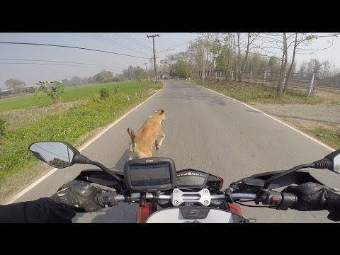 A collision of Motorcycle and Cow