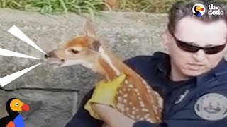 Crying Baby Deer Reunited With His Mom  | The Dodo by The Dodo