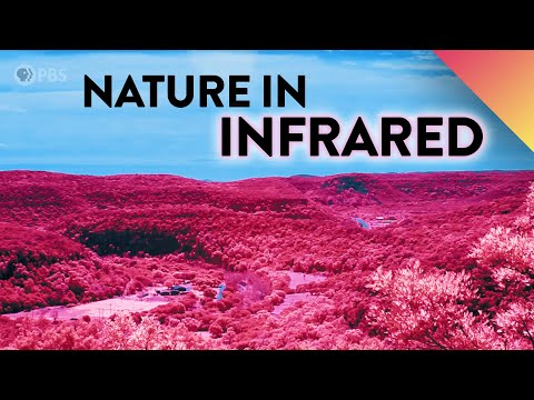 What If We Could See Nature In Infrared?