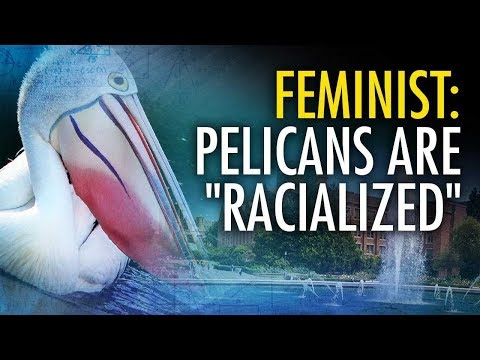 "Feminist Scholar Links Pelicans To ""Racialized Sexual Violence"" 