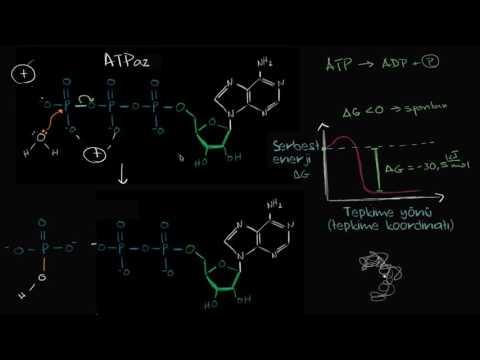 BİYOKİMYA - ATP