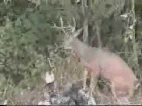 Thợ săn bị săn ngược