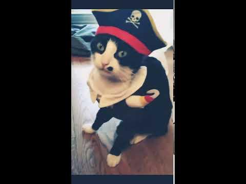 Ce déguisement de chat pirate est incontournable. Mr Jaggou, un mannequin né !