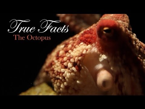 Facts - music: http://www.soundcloud.com/querflote Special thanks to the Monterey Bay Aquarium for letting us shoot on location! Check out youtube.com/MontereyBayAqu...