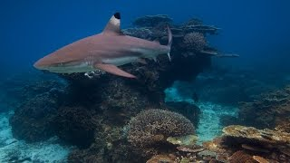 How stealth is this shark?