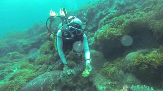 Sogod Philippines  city images : Sogod Bay, Southern Leyte Philippines Jan 17, 2016 dive#2 turtle