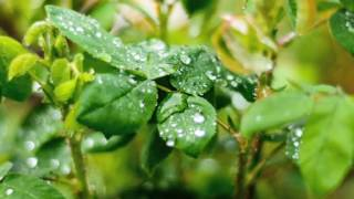 This Physics video explains how dew, fog and frost are formed. This video is meant for students studying in class 10 and 11 in CBSE/NCERT and other state boards.About us: We are a social enterprise working on a mission to make school learning interesting, relevant and affordable to every child on this planet. You can watch our FREE online videos at http://www.bodhaguru.com/watch and download our practice application/games - just visit http://www.bodhaguru.com/play If you like our videos, subscribe to our channel http://www.youtube.com/user/BodhaGuruLearning. Feel free to connect with us at http://www.facebook.com/BodhaGuru OR http://twitter.com/Bodhaguru Have fun, while you learn. Thanks for watching -- Team BodhaGuru