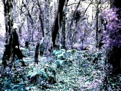 Lost Peacocks - Virus online metal music video by VIRUS