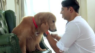 Every Dog Has It's Day - Entertainment Behind the Scene Making full download video download mp3 download music download