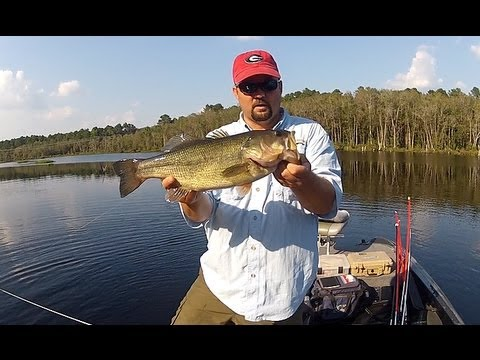 Bass fishing everything you ever wanted to know about it for How to catch bass fish