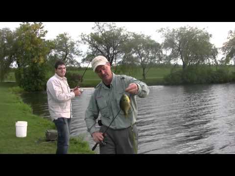 чечевица какая на нее клюет рыба