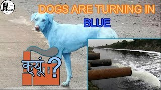 Why STRAY DOGS are turning BLUE ??