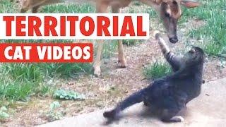 animale faze pisici