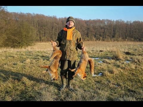 POLOWANIE NA LISA - FOX HUNTING 2017-01-29