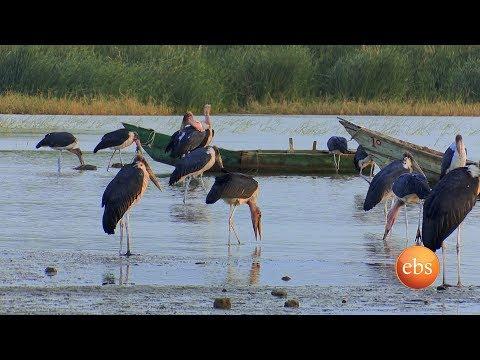 Discover Ethiopia Documentary - Season 1 EP 3- Ziway