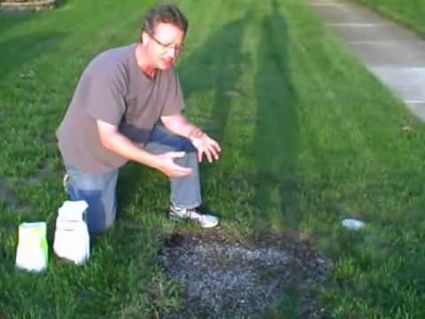 grass - Visit http://www.askthehardwareguy.com for more tips. Subscribe for new videos. If you want to grow grass from seed in a bare patch of lawn, follow these 4 s...