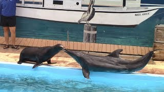 Rough Toothed Dolphin & Sea Lion Show at Gulf World Marine Park (5/5/17)
