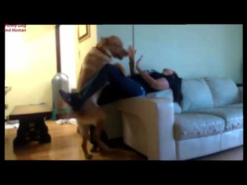 Download Funny Dog and girl, dog and human 2016 Full HD HD Mp4 3GP Video and MP3