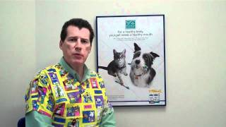 Doc Pawsitive Explaining Dental Campaign