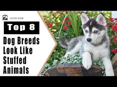 8 Dog Breeds That Look Like Stuffed Animals