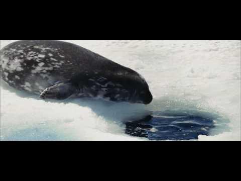 Oceans Clip 'Cold Swim'