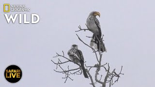 Safari Live - Day 252 | Nat Geo Wild by Nat Geo WILD