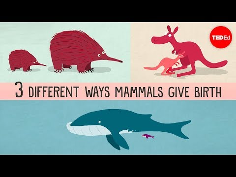 The Three Vastly Different Ways In Which Mammals Give Birth to Their