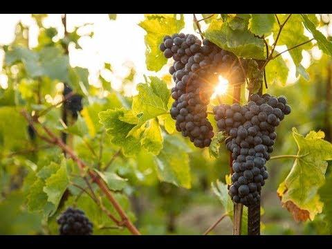 Biến đổi khí hậu đảo lộn ngành công nghiệp rượu vang ở Châu Âu @ vcloz.com