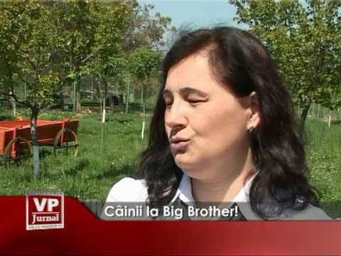 Cainii la Big Brother!