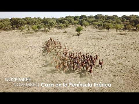 Noviembre 2017: Caza en la Península Ibérica