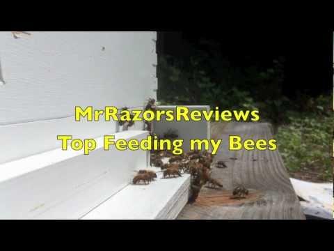 Feeding My Bees