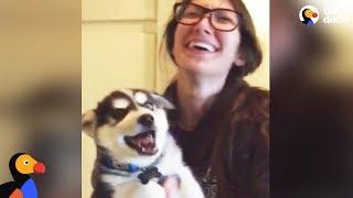 Husky Puppy Tries To Talk  | The Dodo by The Dodo